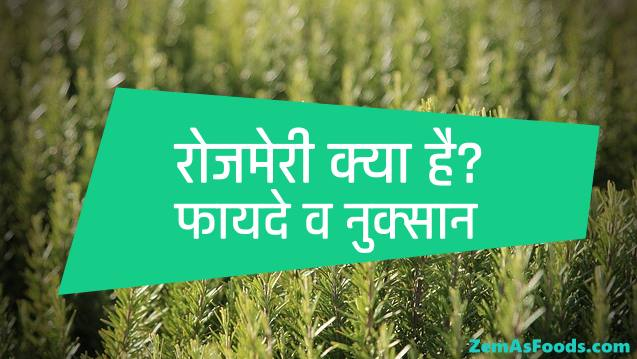 Rosemary benefits & side effects in hindi