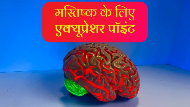 brain-acupressure-points-in-hindi