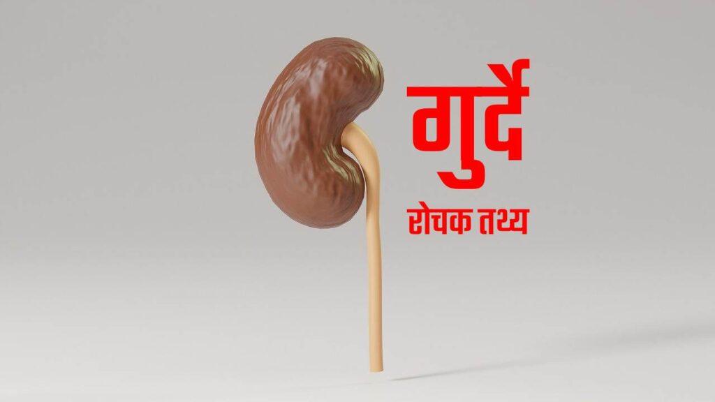 kidneys facts in hindi