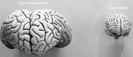 intersting-brain-facts-in-hindi