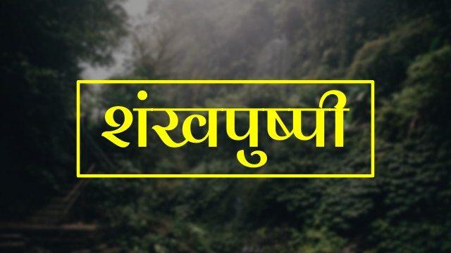 Shankhpushpi in Hindi